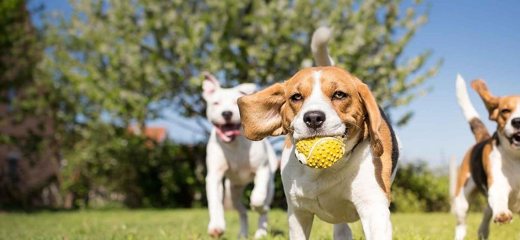 beste nieuw hondenspeelgoed