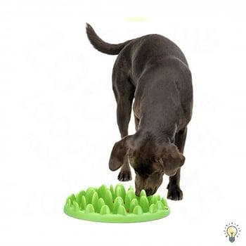 beste hondenspeelgoed voeding