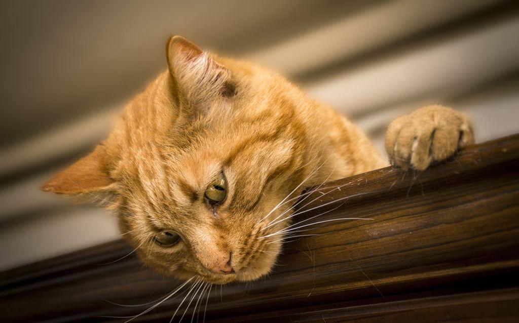 beste kattenbakvulling
