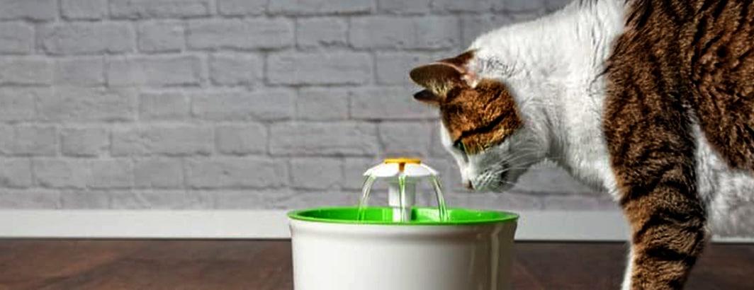 Goede drinkfontein katten online