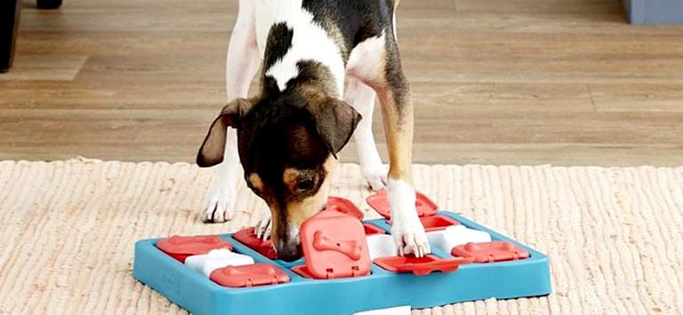 Beste slim hondenspeelgoed