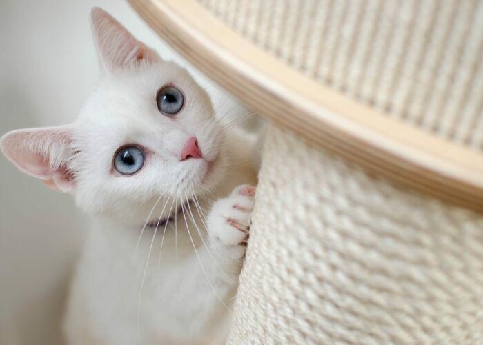 witte kat aan krabpaal