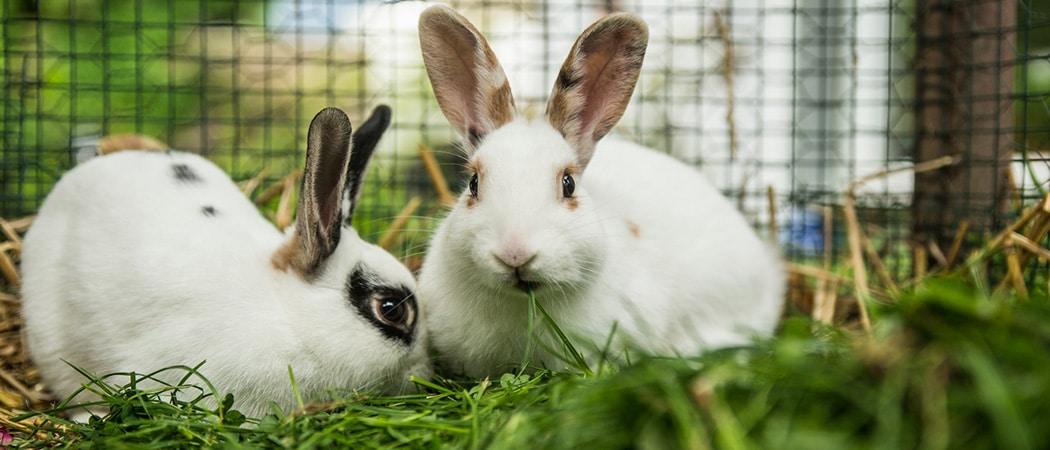 beste konijnenhokken