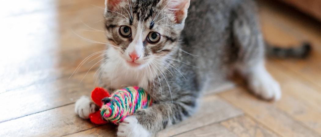 Beste Kattenspeelgoed