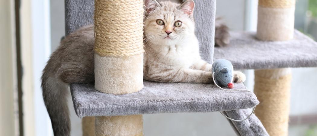 beste-kattenspeelgoed