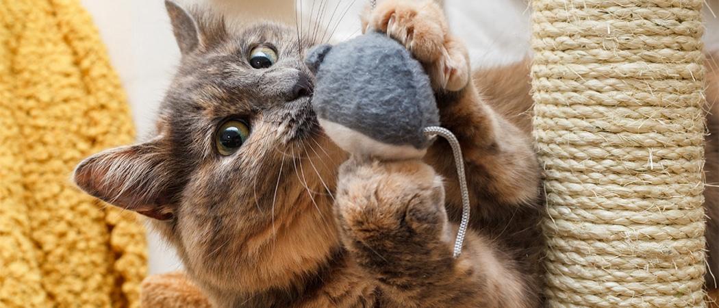 beste kattenspeeltjes